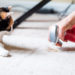 Pet Proof Your Home With These Tips